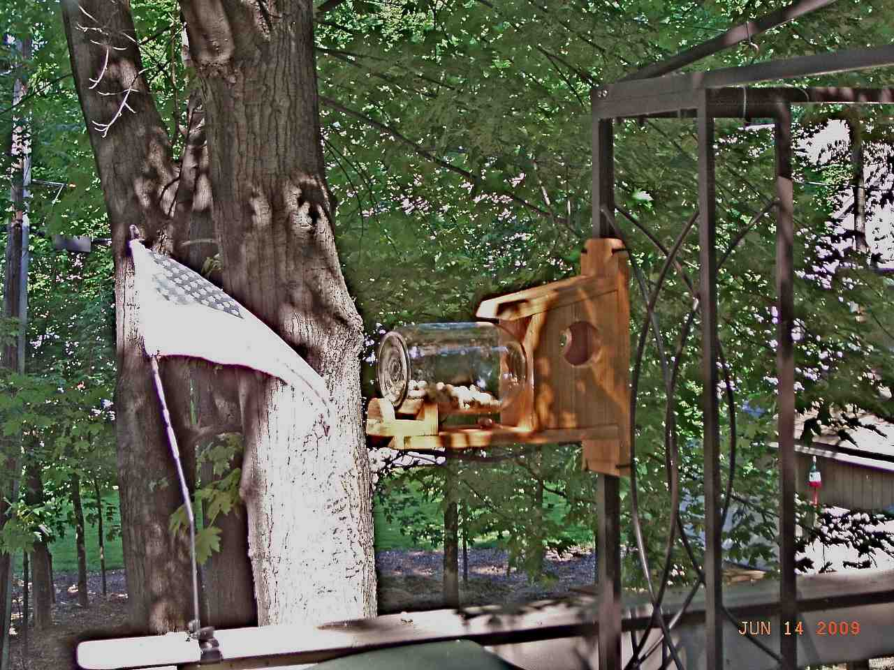 Squirrel Box