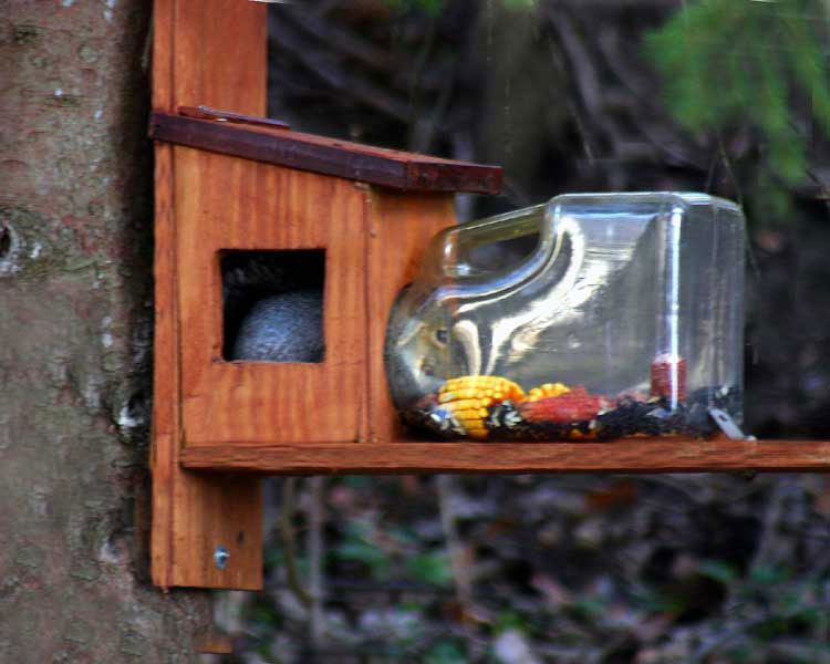 Modified Squirrel Feeder